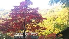 11月13日紅葉.jpg