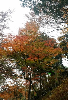 11月23日紅葉.jpg