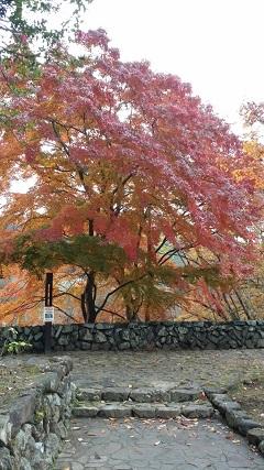 11月23日高尾山紅葉.jpg