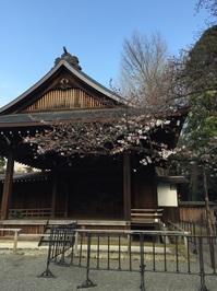 靖国神社標本木の桜.jpg