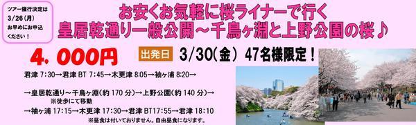 桜ライナー2.jpg