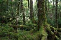 苔の森.jpg