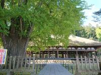 新宮熊野神社.jpg